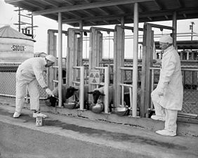 Hanford_sheep_testing_2